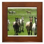 Appaloosa Framed Tile