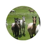 "Appaloosa 3.5"" Button (100 pack)"