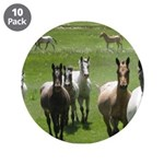 "Appaloosa 3.5"" Button (10 pack)"