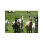 Appaloosa Rectangle Magnet (100 pack)