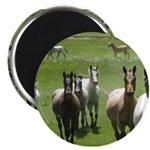"Appaloosa 2.25"" Magnet (100 pack)"