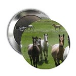 "Appaloosa 2.25"" Button"