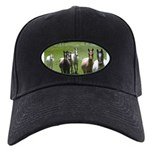 Appaloosa Black Cap