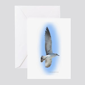 Flying Seagull Greeting Cards (Pk of 10)