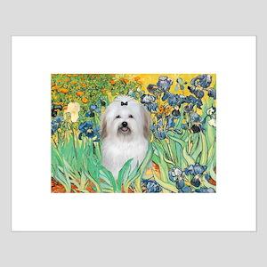 Irises / Coton Small Poster