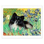 Irises / Pomeranian(bb) Small Poster