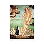 Venus / Schipperke #5 Mini Poster Print