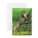 SQUIRREL! Greeting Cards (Pk of 10)