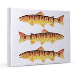 Masu Salmon Cherry Trout 20x24 Canvas Print