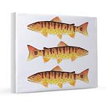 Masu Salmon Cherry Trout 16x20 Canvas Print