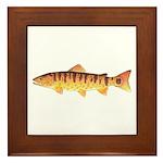 Masu Salmon Cherry Trout Framed Tile