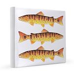 Masu Salmon Cherry Trout 12x12 Canvas Print