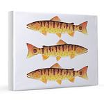 Masu Salmon Cherry Trout 8x10 Canvas Print