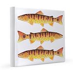 Masu Salmon Cherry Trout 8x8 Canvas Print