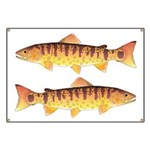 Masu Salmon Cherry Trout Banner
