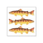 Masu Salmon Cherry Trout Sticker