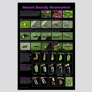 Monarch Metamorphosis Large Poster