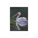 Pelican Sticker (Rectangle 50 pk)
