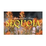 ABH Sequioa 35x21 Wall Decal