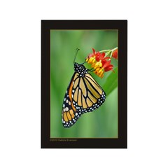 Monarch & Milkweed No3 Rectangle Magnet (100 pack)