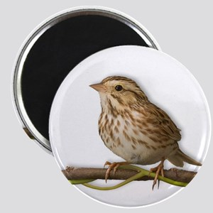 Savannah Sparrow Magnet