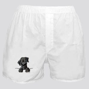 PoCKeT Black Lab Puppy Boxer Shorts
