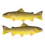 Apache trout 5x7 Flat Cards (Set of 20)