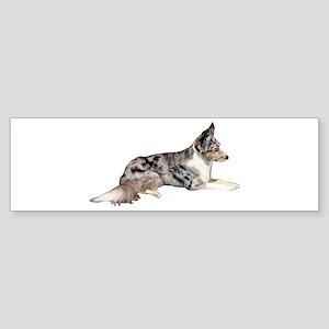 Blue Merle Sticker (Bumper)