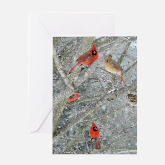 Cardinal Winter Greeting Card