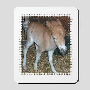Miniature Horse baby Mousepad