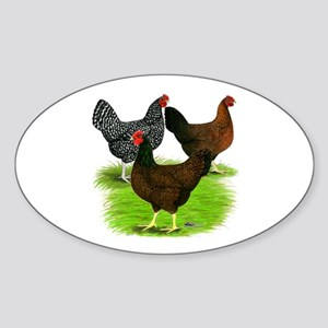 Dark Brown Egg Hens Sticker (Oval)