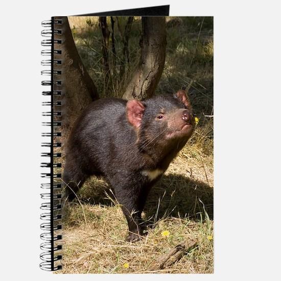 Tasmanian Devil Journal