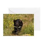 Tasmanian Devil Greeting Cards (Pk of 10)