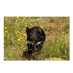 Tasmanian Devil Postcards (Package of 8)