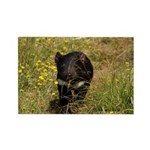 Tasmanian Devil Rectangle Magnet (100 pack)