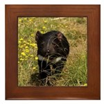 Tasmanian Devil Framed Tile