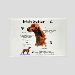 Irish Setter 1 Rectangle Magnet