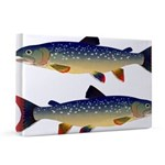 Dolly Varden Trout 20x30 Canvas Print