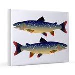 Dolly Varden Trout 16x20 Canvas Print