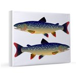 Dolly Varden Trout 11x14 Canvas Print