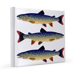 Dolly Varden Trout 12x12 Canvas Print