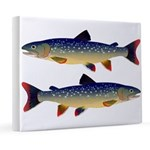 Dolly Varden Trout 8x10 Canvas Print