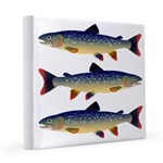 Dolly Varden Trout 8x8 Canvas Print