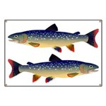 Dolly Varden Trout Banner