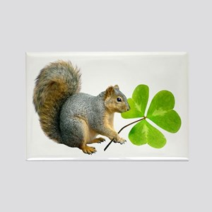 Shamrock Squirrel Rectangle Magnet