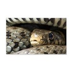 Snake 20x12 Wall Decal