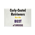 Curly-Coated Retriever Best Rectangle Magnet (10 p