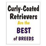 Curly-Coated Retriever Best Small Poster
