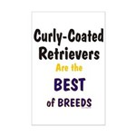 Curly-Coated Retriever Best Mini Poster Print
