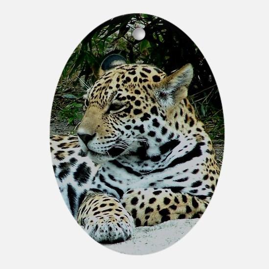 Jaguar Portrait Oval Ornament